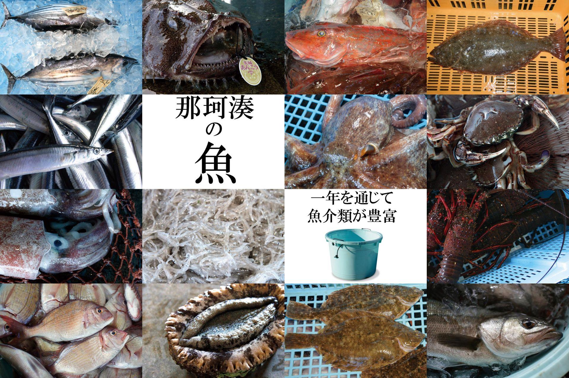 那珂湊の漁業